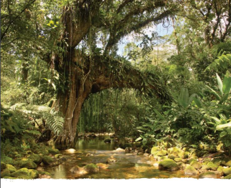 Adaptação Baseada Em Ecossistemas: Oportunidades Para Políticas Públicas Em Mudanças Climáticas – Versão Completa